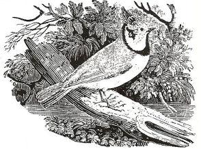 disegno di uccello esotico